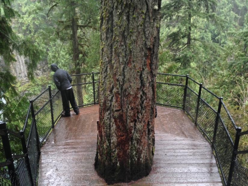 4-15-18 toketee falls (132)
