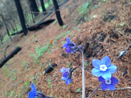 plant 4-15-18 north umpqua trail (58)